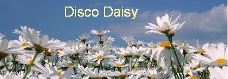 disco daisy
