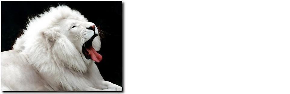 ►leão branco...wwwleaobranco