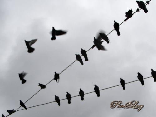 Photographer's Kite-Foto%C4%9Fraf%C3%A7%C4%B1 U%C3%A7urtmas%C4%B1