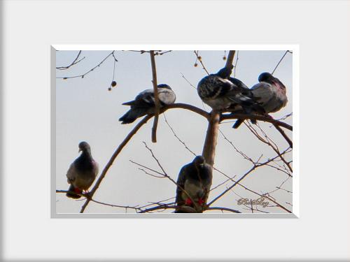 Bird Apartment   Kuş Apartmanı