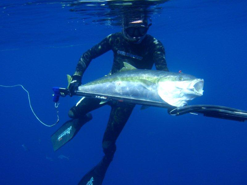 ascension island spearfishing coatesmans spearfishing watermans blog april 2010