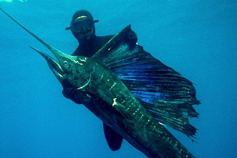 [Spearfishing+Barra+Mozambique.JPG]