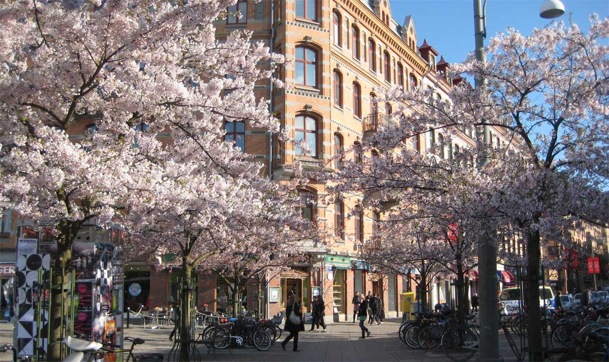 dominerande ledsagare liten nära Göteborg