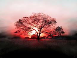 cây cảnh vip