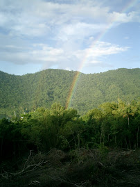 Rainbow Rainforest