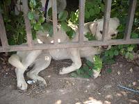 Paloma escapando del calor