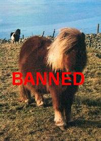 Nanny Bans Ponies