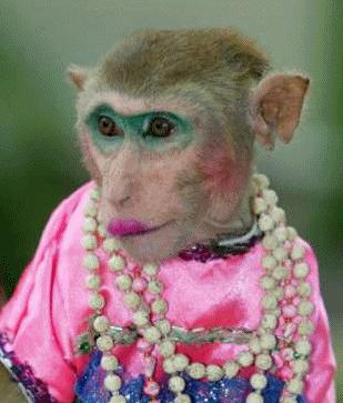 monkey video comedy