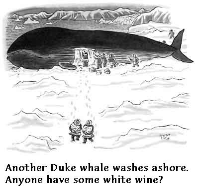 Duke whale washes ashore