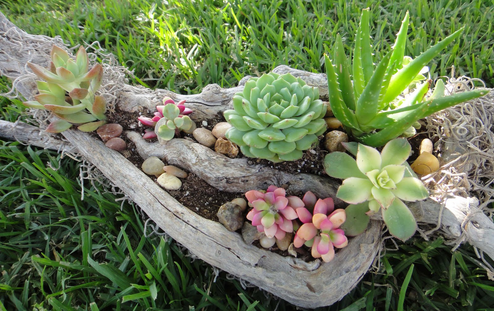 K8 vision driftwood succulent arrangement for Garden arrangement