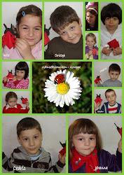 Gänseblümchen - Gruppe