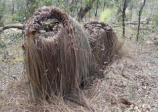 Trees Look Like Monster