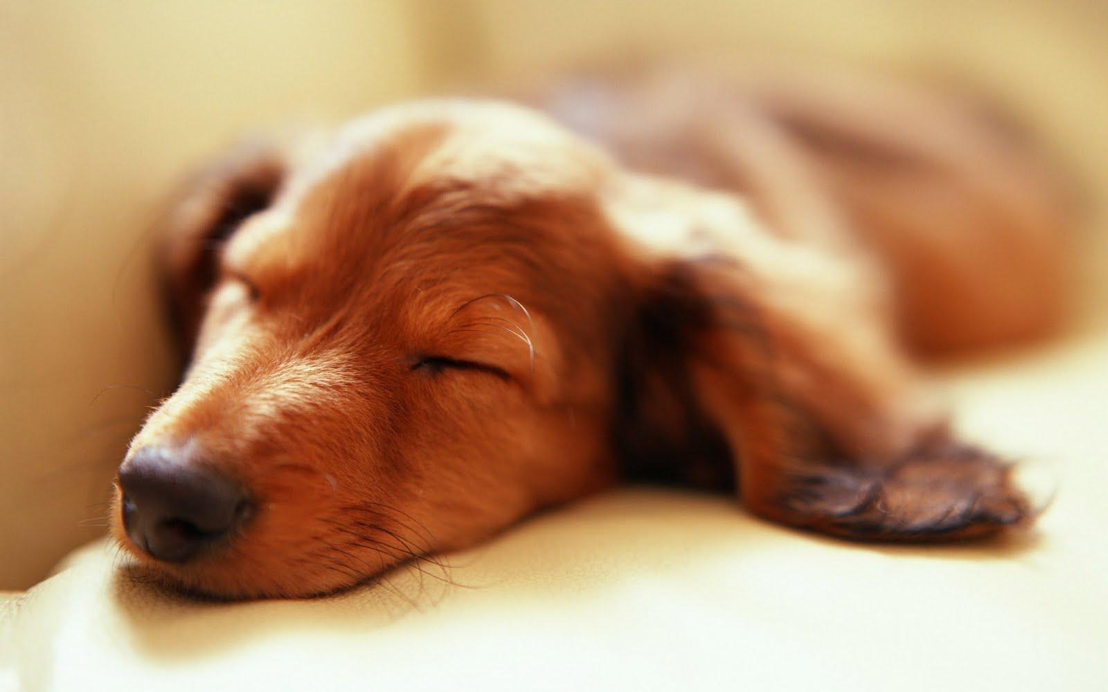 enfermedades de los perros y fotos de perros