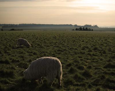 Sheep at Stonehenge. photograph by Tim Irving
