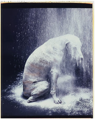 Avalanche,  William Wegman