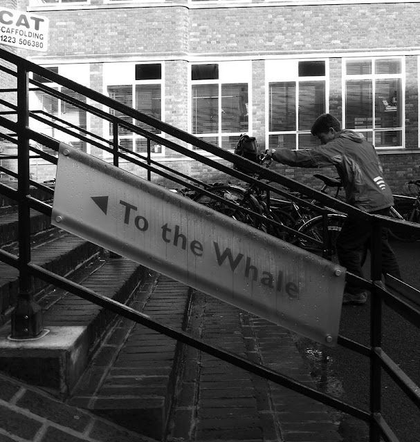 To the Whale. photograph by Tim Irving