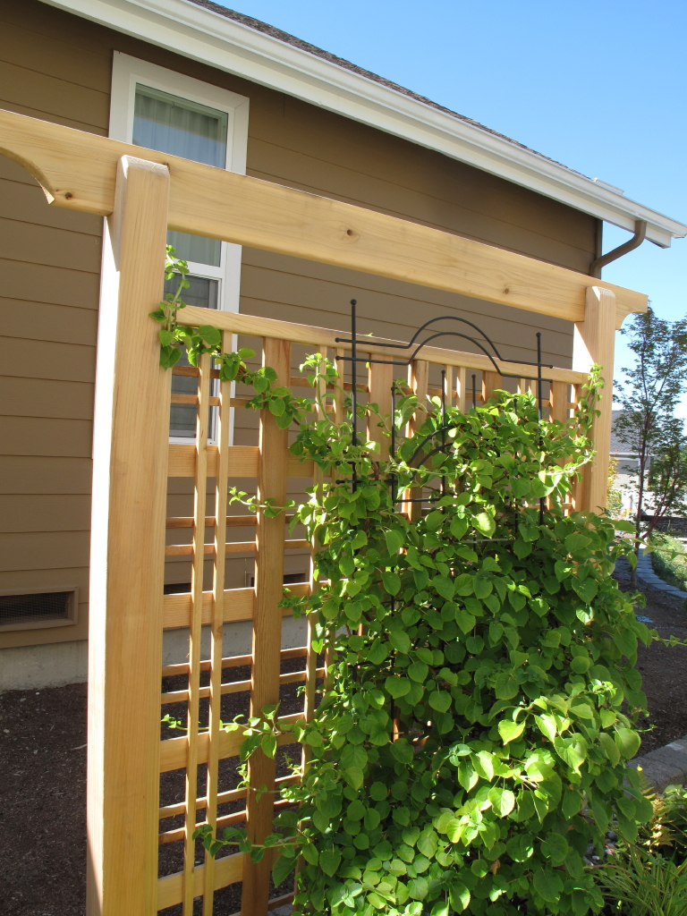 Garden adventures for thumbs of all colors screening for Privacy trellis