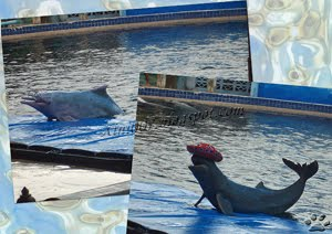 Simma med delfiner i Chantaburi