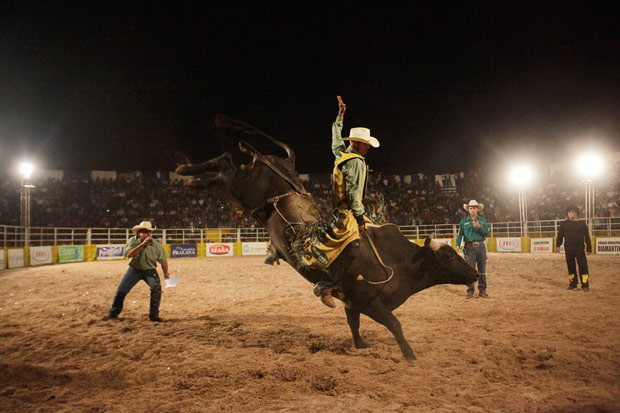 A cowboy rides a bull during a rodeo festival