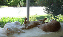 My CEO, CFO and private banker working hard in my office (Sweet Pea, Hopper & Rusty)
