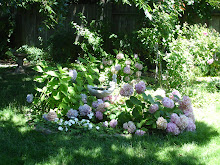 Yummy Hydrangeas ~ Endless summer
