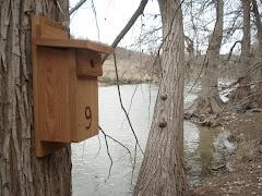 Nest Box 9