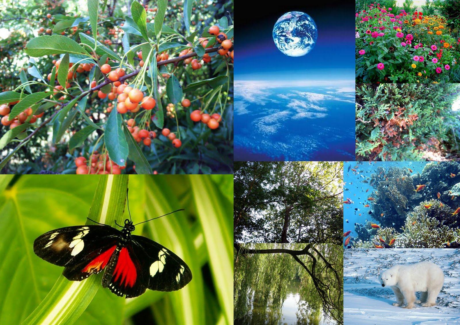 Biodiversit%C3%A0
