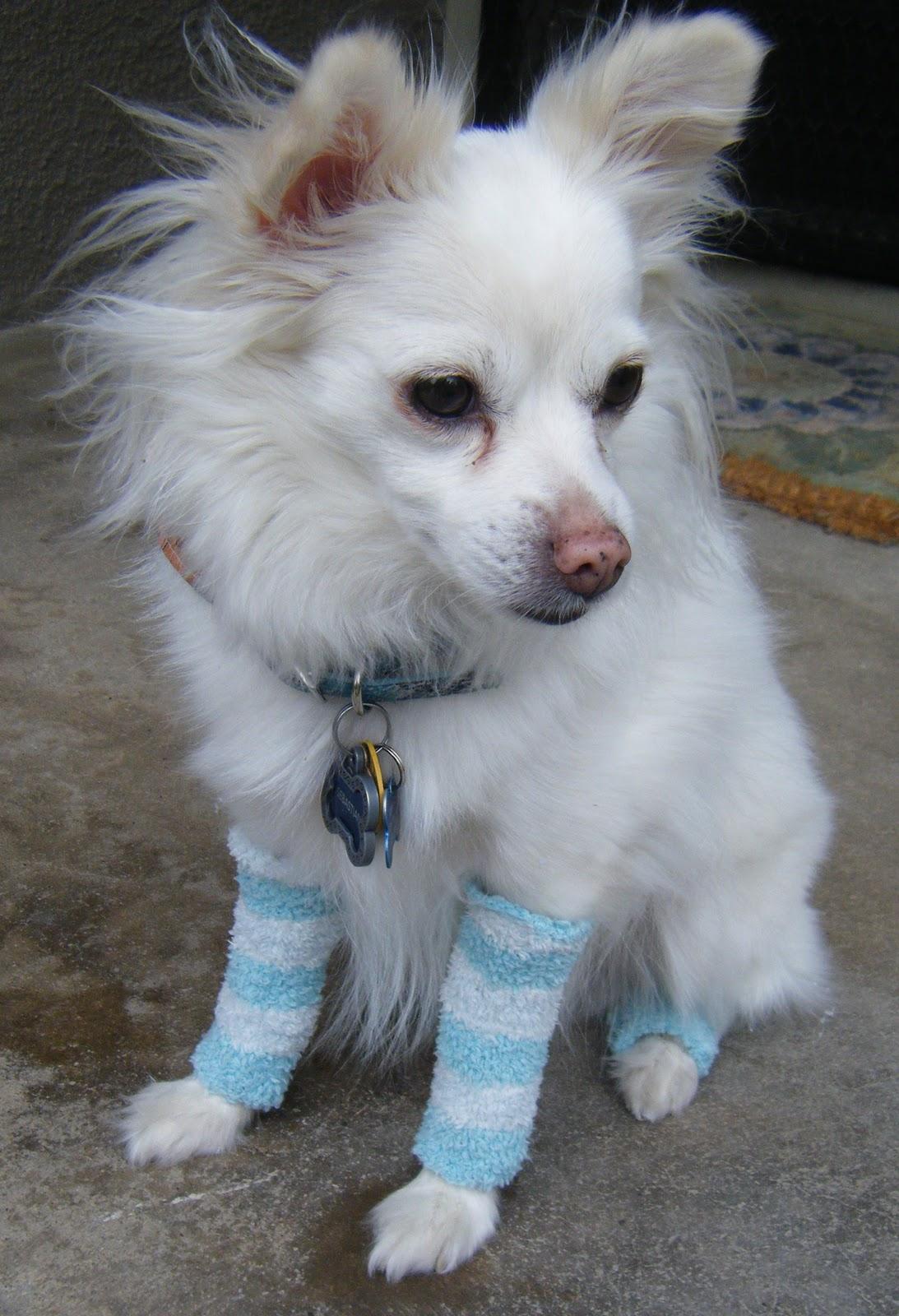 Volpino Italiano Dog Paws Pattern Men-Women Adult Ankle Socks Novelty Socks