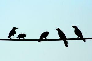 blackbirds tattoo