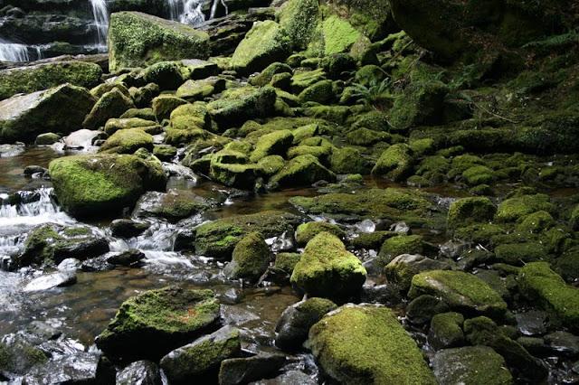 Moss Covered Rocks Nelson Falls Tasmania Australia - © CKoenig
