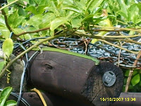 snake in my garden