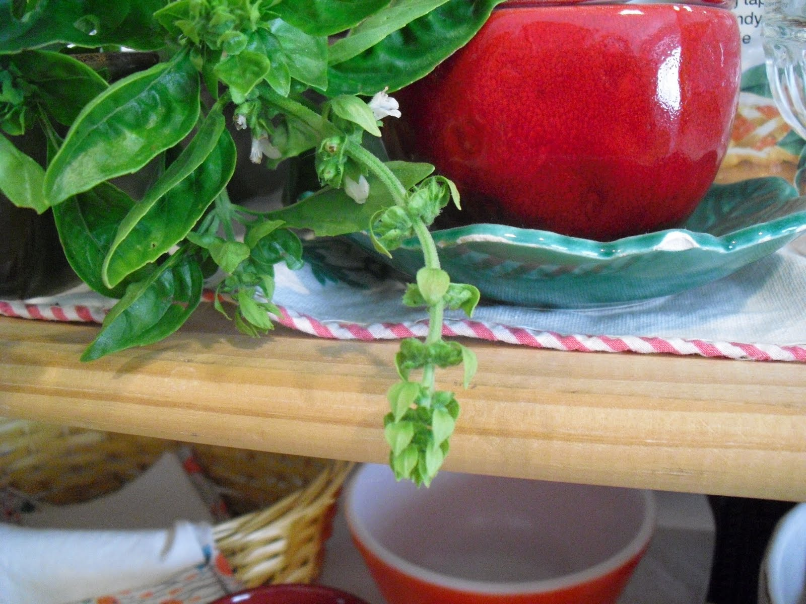 how to keep fresh picked basil from wilting