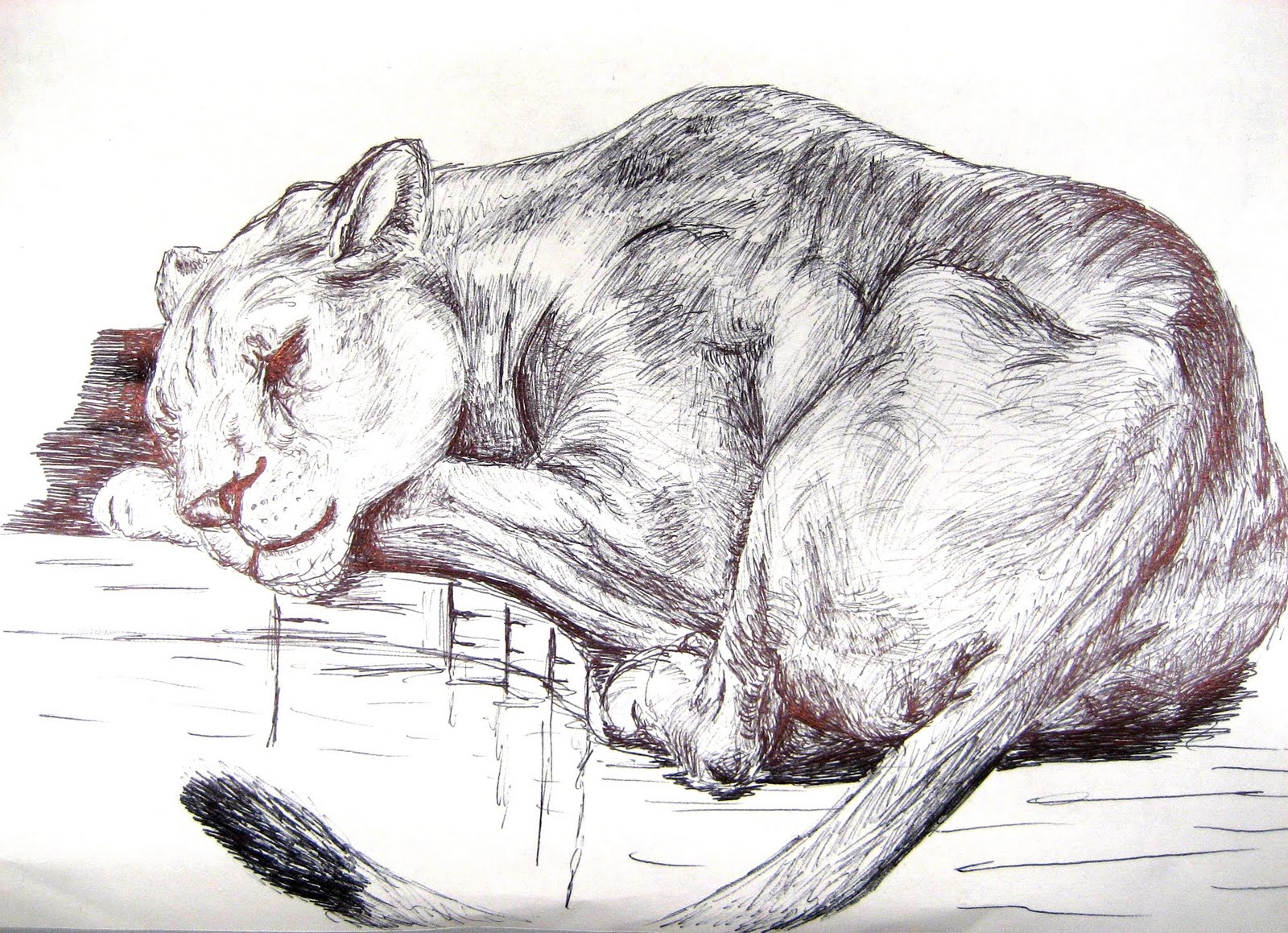 chuck does art ink drawings animals and plants