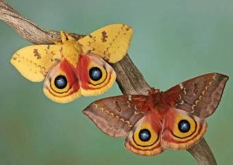 Não corras atrás das borboletas