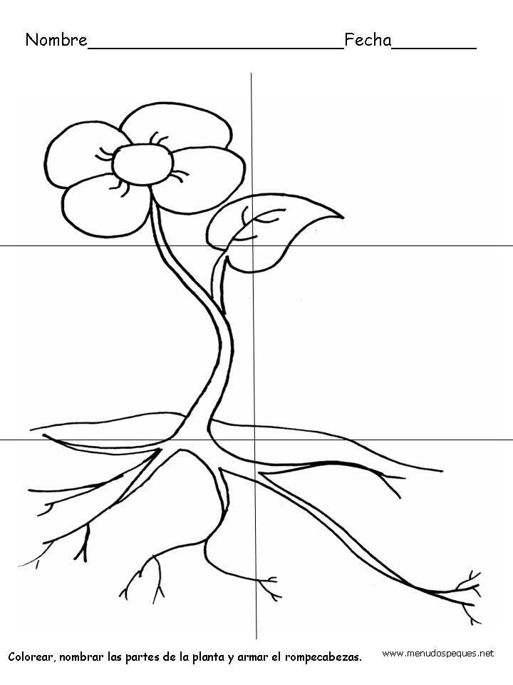 Esos locos bajitos de infantil plantas - Fichas de plantas para ninos ...
