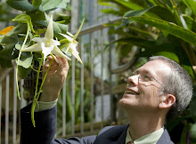 Angraecum and me
