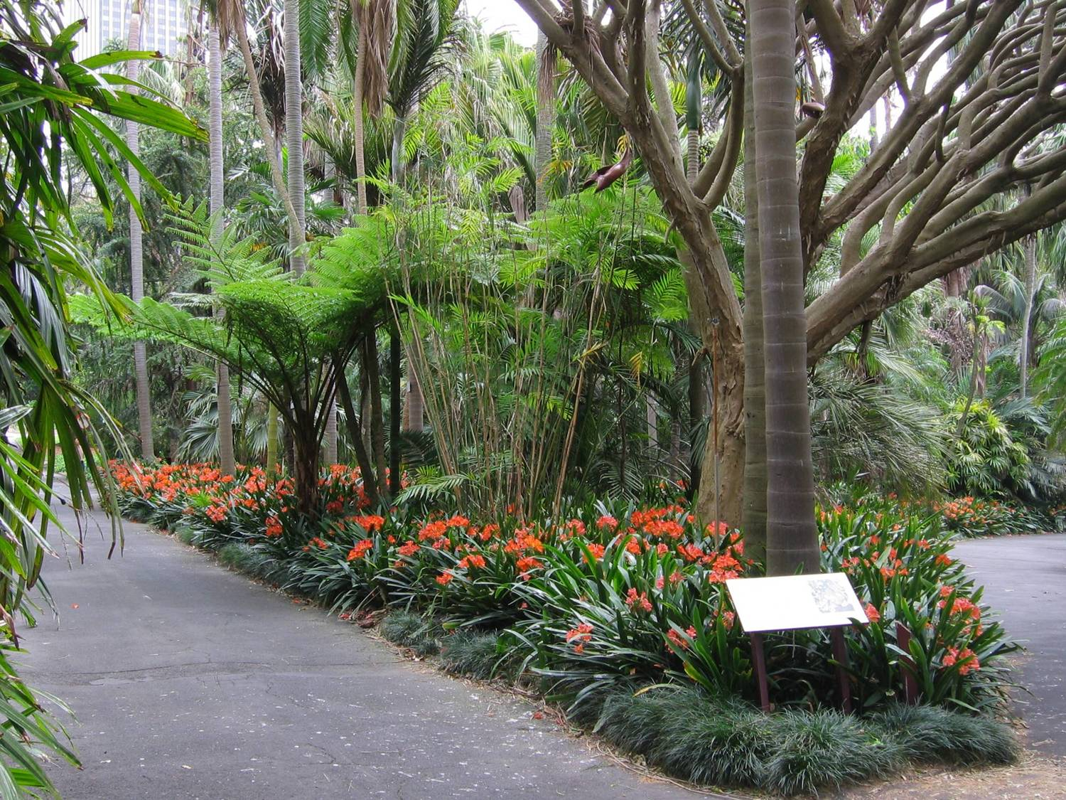 how to get to brisbane botanical gardens from indropilli