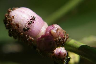 photo of ant