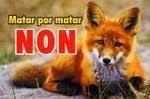 Protejamos al zorro
