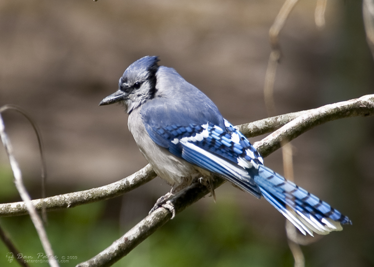 Bird Photography In The Smoky Mountains Pigeon Forge