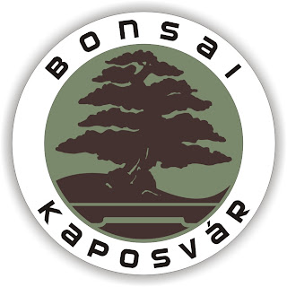 BONSAI BOLT HÁLÓZAT / BONSAI SHOP NETWORK !