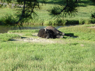 De bizon