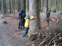 Im Wald die Bäume umarmen
