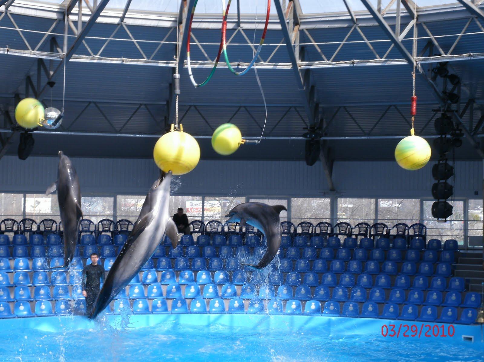 http://2.bp.blogspot.com/_ook4N5MwmdI/S7ICSktbjjI/AAAAAAAAAII/QiK6AS_vMNM/s1600/Dolphin+Show+(2).JPG