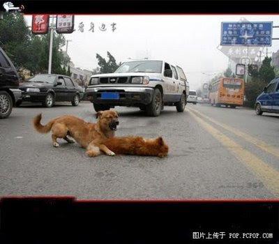 http://2.bp.blogspot.com/_opptvFBa4ck/SLgjYpMFKvI/AAAAAAAAEqE/Fii-IsbCgmU/s400/Animals-%26-Loyalty-1.jpg