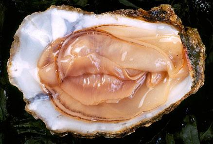 oyster vag
