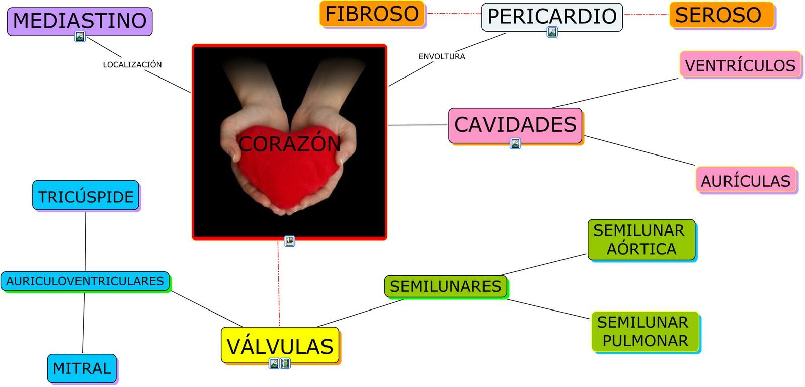 chivanafis2010: Mapa conceptual de la Anatomía del corazón, en cmap ...