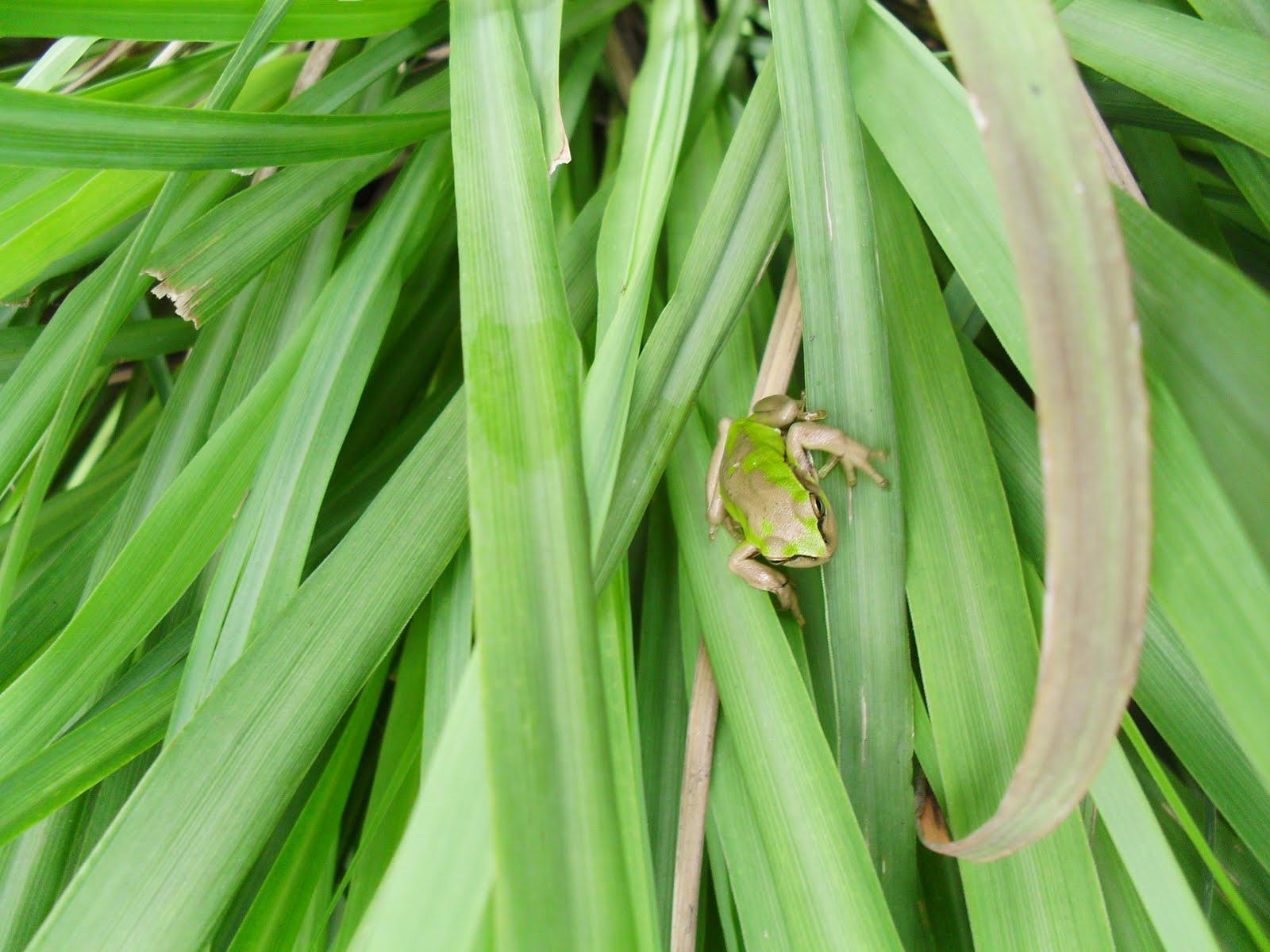 Reinos animal y vegetal plantas medicinales i - Plantas de hojas grandes y verdes de exterior ...