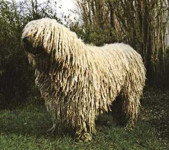 Shaggy Dog Kennel