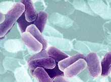 know the enemy: what is ecoli and salmonella ?